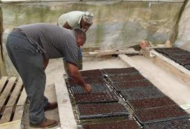 Volontärarbeta med jordbruk utomlands : Jamaica