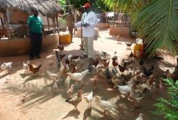 Volontärarbeta med jordbruk utomlands : Togo