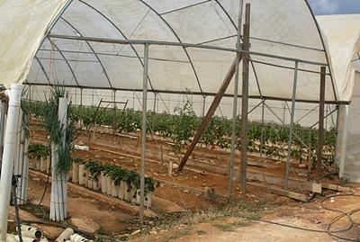 Farm where volunteers on the Farming project in Jamaica work