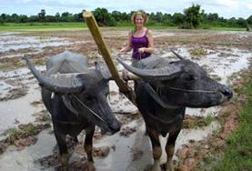 Volontär i Kambodja : Kultur & Samhälle
