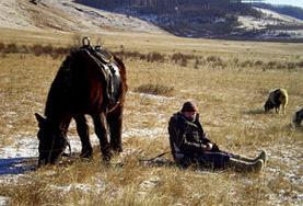 Volontär i Mongoliet : Kultur & Samhälle