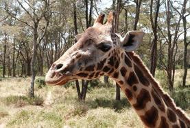 Volontärarbeta med Natur & Miljö : Kenya
