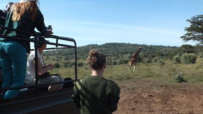 Volontär miljö i Kenya observerar giraffer i deras naturliga miljö