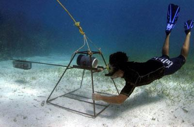 Volontär utför forskningsarbete under ytan vid hajprojektet på Fiji