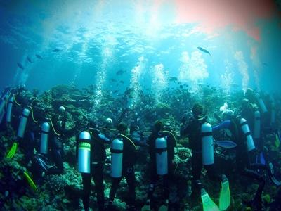 En grupp volontärer vid hajprojektet på Fiji deltar i ett dyk