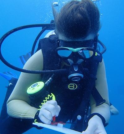 Volontär för anteckningar under ytan vid hajprojektet på Fiji