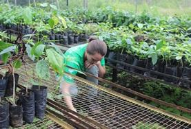 Volontärarbeta med Natur & Miljö : Ecuador