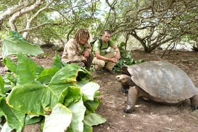 Jättesköldpaddor vid uppfödningscenter i anslutning till naturvårdsprojekt på Galapagosöarna.