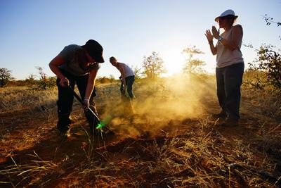 Volontär miljö, vid naturvårdsprojekt i södra Afrika arbetar med att rensa bort invasiva växtarter