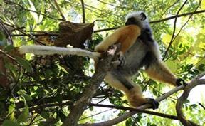 Volontärarbeta med Natur & Miljö : Madagaskar