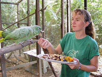 Volontär vid naturvårdsprojektet i Peru matar papegoja
