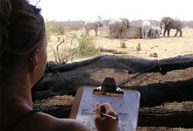 Volontär i Sydafrika : Natur & Miljö