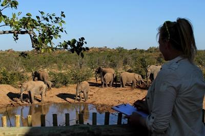 Volontärarbete i naturreservat i södra Afrika, observation av elefanter.