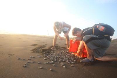 Två volontärer släpper ut nykläckta sköldpaddor i havet i Mexiko