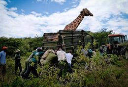 Volontär i Kenya med Projects Abroad : Natur & Miljö