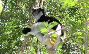 Natur och Miljöprojekt för ungdomar : Madagaskar