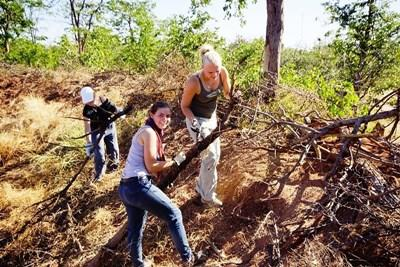 Teen volunteers clean up trees on the Conservation project in South Africa