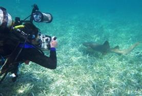 Natur och Miljöprojekt för ungdomar : Belize
