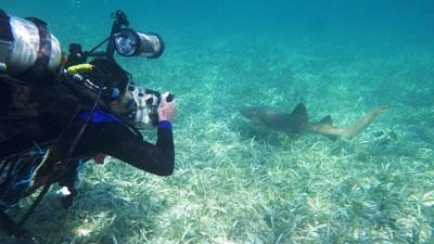 Volontär fotograferar en ung haj under vatten