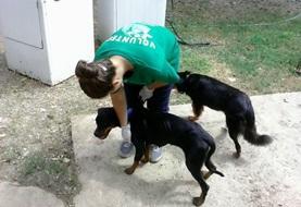 Volontärarbete Utomlands - volontär med hundar