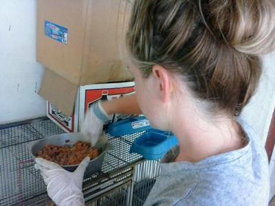 Volunteer feeds animals on the Animal Care project in Jamaica