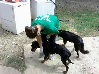 Intern treats weak dogs at an animal care center in Jamaica