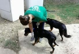 Volontär med djur utomlands : Jamaica