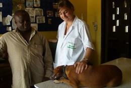 Volontär i Ghana : Veterinär & Djurvård