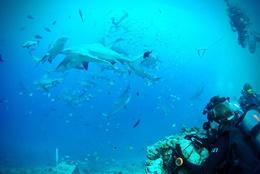 Volontär på Fiji - Åk på volontärresor till Söderhavet! : Natur & Miljö