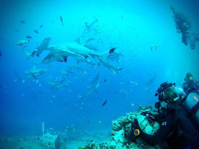 Volontär på hajdyk på Fiji